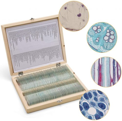 6. 100 Prepared Microscope Slides Set with Wooden Casefor